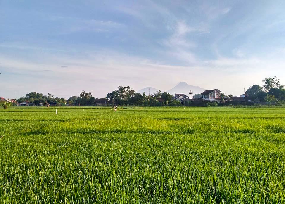 /public/file/article/Yogyakarta.jpg